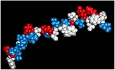 Estructura de un péptido.