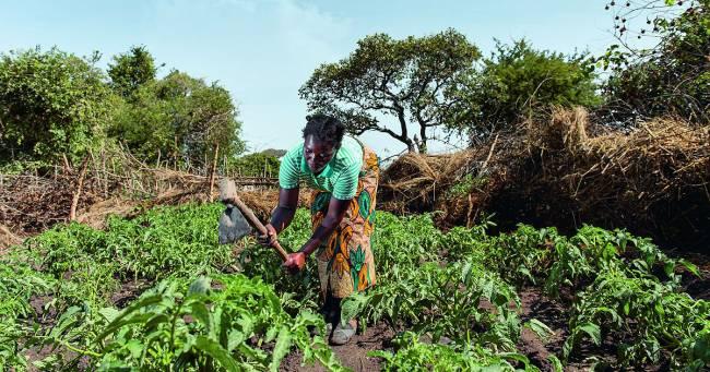 Mujer africana realizando tareas agrícolas.
