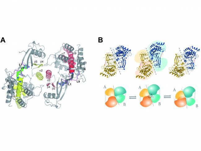 enzima colina quinasa