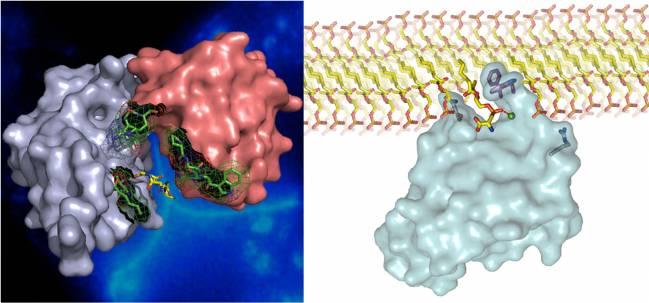proteínas asma csic