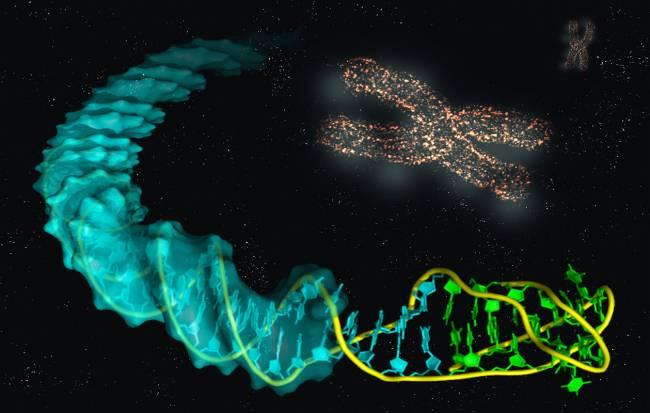 Imagen ilustrativa de la estructura de la unión del i-ADN con el B-ADN