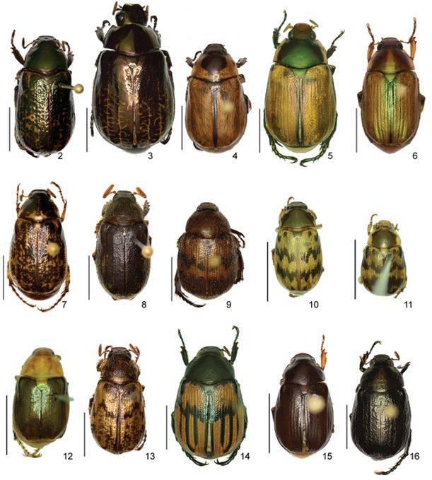 Algunos ejemplares de las 57 especies de coleópteros descubiertos por el CIBIO UA en Costa Rica.