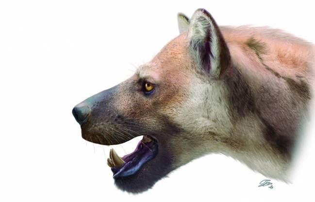 Ilustración del nuevo perro-oso