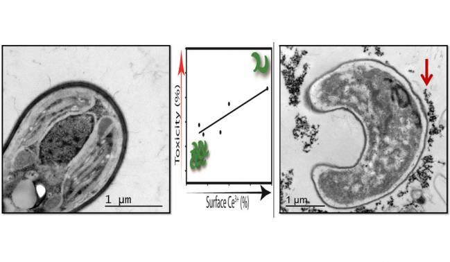 ¿Son las nanopartículas seguras para el medio ambiente?