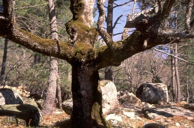 El trabajo, desarrollado por investigadores de la Universidad de Valladolid, ha sido publicado en la revista 'Annals of Forest Science'.