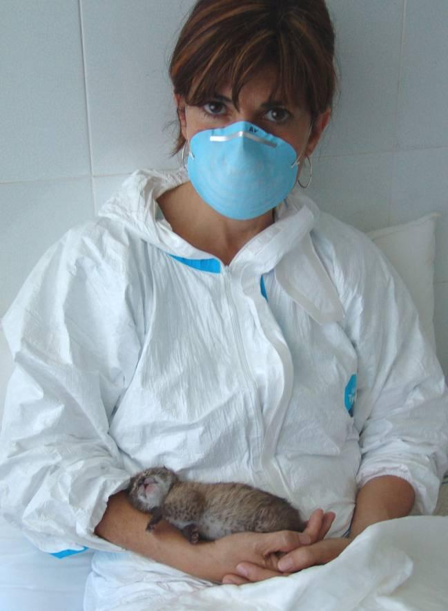La investigadora Astrid Vargas y un lince recién nacido