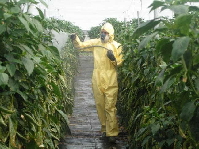 Operario aplicando productos fitosanitarios en un invernadero de Almería