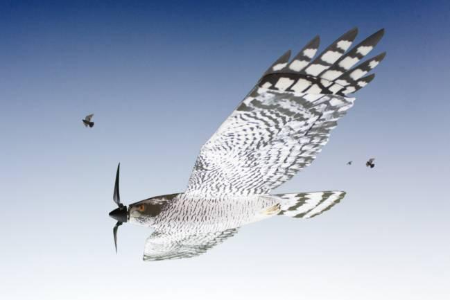 Dron mimético aviar