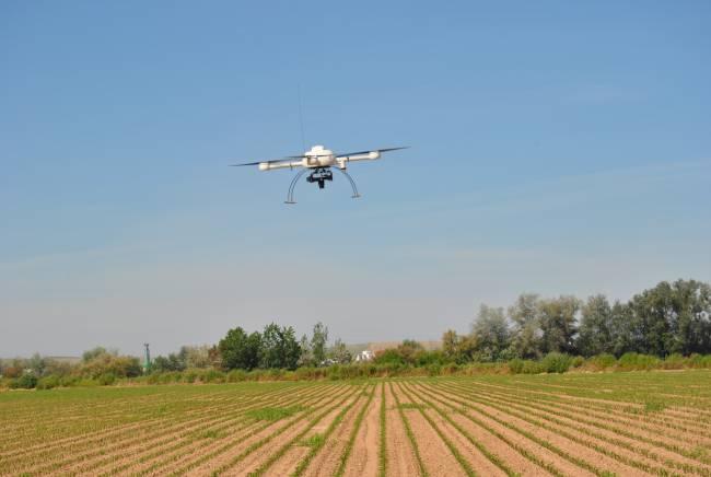 Vehículo Aéreo No tripulado (UAV) iniciando el vuelo en un campo de maíz.