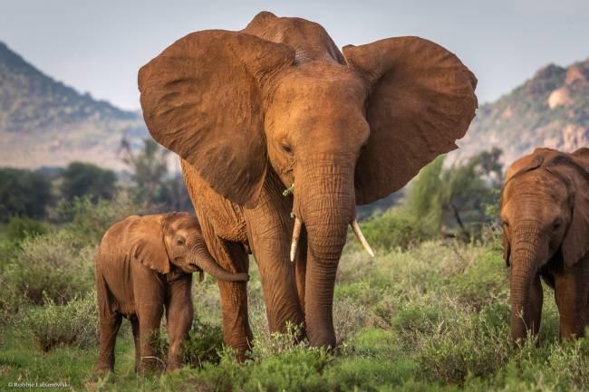 Madre elefante y su cría en Kenia