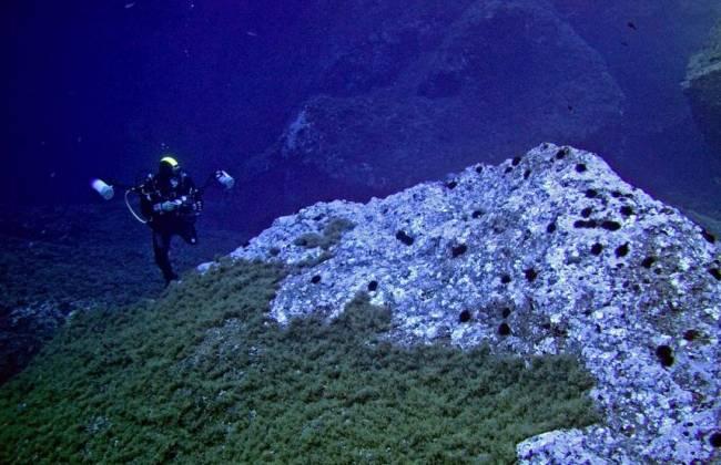 Poblaciones de erizos marinos en las islas Medas