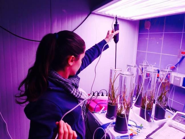 Investigadores de la UCA en sus laboratorios.