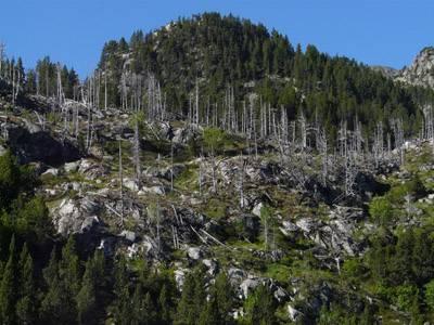 Areas defoliadas en bosques mediterráneos. Foto: Angela Ribas.