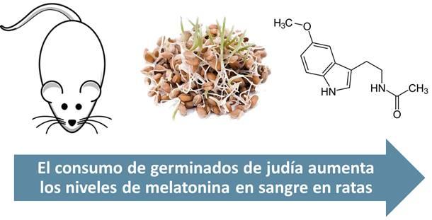 El consumo de germinados de judía aumenta los niveles de melatonina en sangre