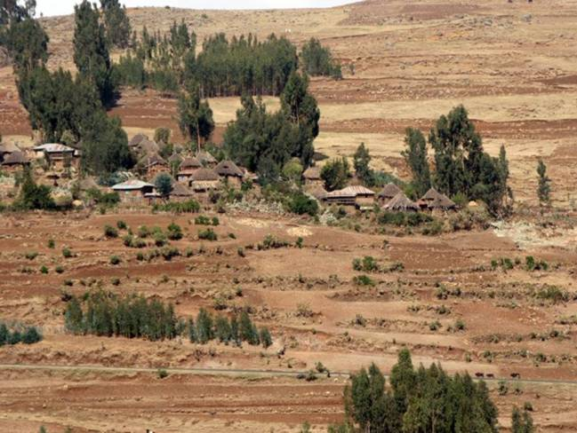 Ensayo experimental de eucalipto con razas locales española y etíope.