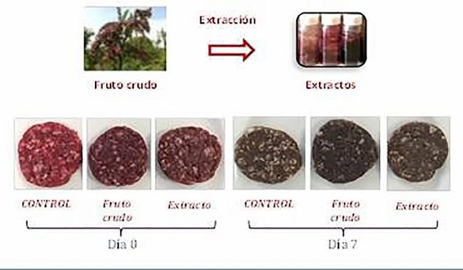 Diagrama con imágenes de la aplicación del fruto crudo del mortiño y sus extractos a hamburguesas. Se muestra la evolución del deterioro del color de las hamburguesas durante su almacenamiento refrigerado, del día cero al día siete.