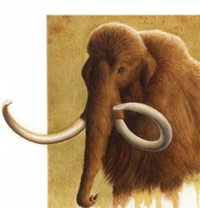 Mamut lanudo. Ilustración original de Diego Álvarez Lao.