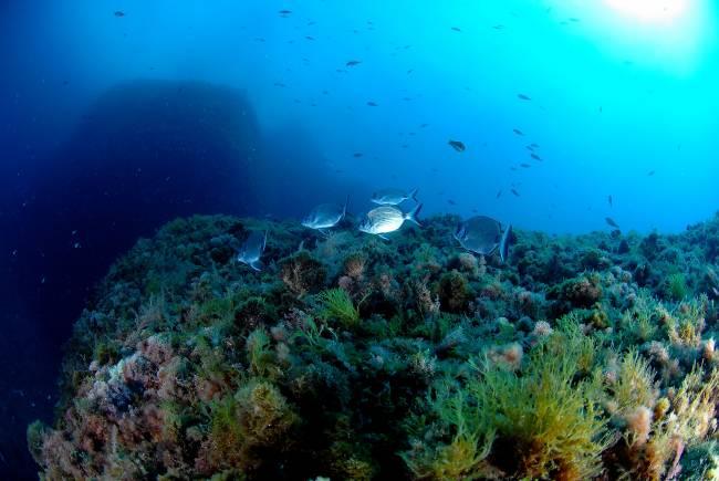 El estudio alerta de que hacen falta decenas de años para recobrar totalmente una población de peces en el Mediterráneo (IMAGEN: Josep Clotas y Marta Cunillera).