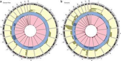 dos tipos de células con diferente composición genética