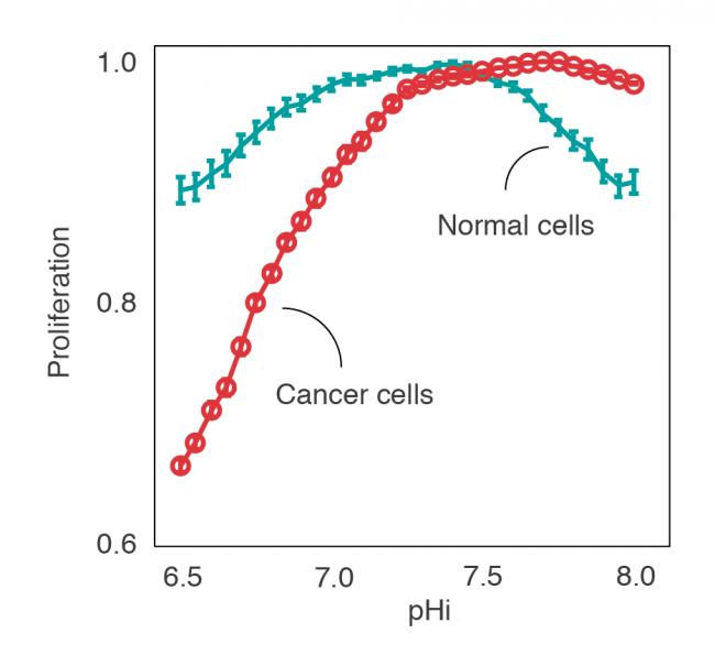 Predicción computacional de la proliferación de células cancerosas y saludables a diferentes pHs intracelulares