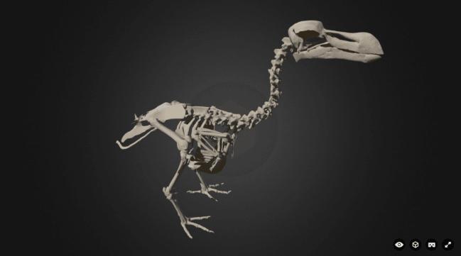 Atlas 3D del dodo