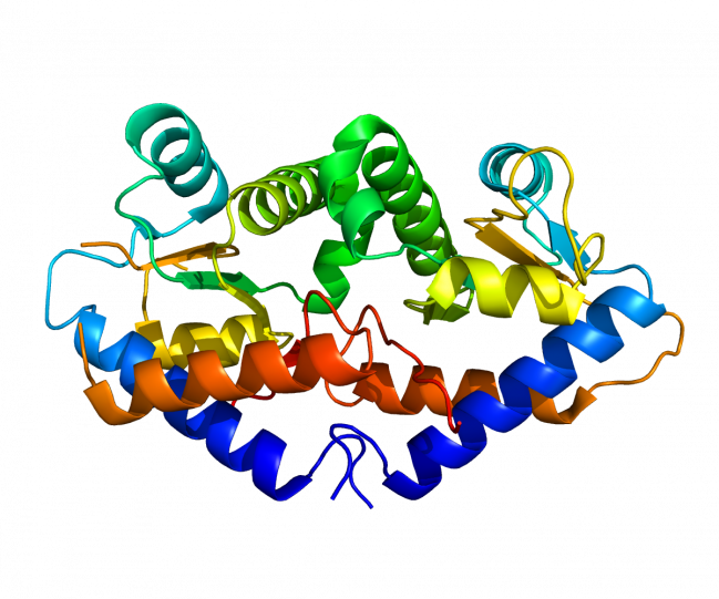 Expresión del gen Gadd45g. / Wiikpedia