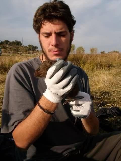 Tras la llegada de la especie invasora, la rata de agua y el musgaño de Cabrera han desaparecido en el 40% de las zonas que habitaban