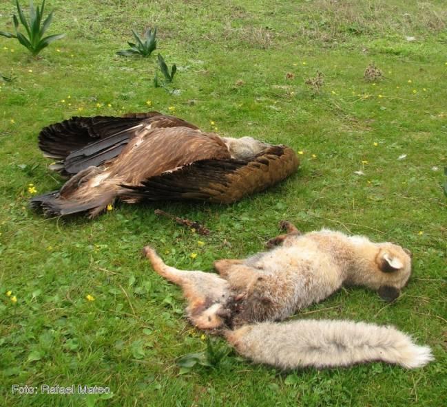 Dos animales muertos sobre el campo