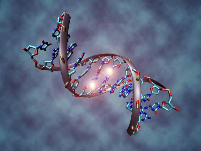Molécula de ADN metilada.