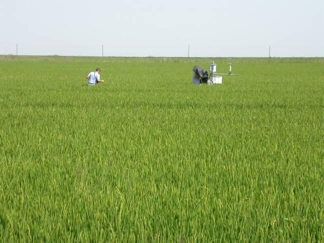 Situación, colocación y programación de la estación de Eddy Covariance (California, EEUU) en el arrozal del ensayo.