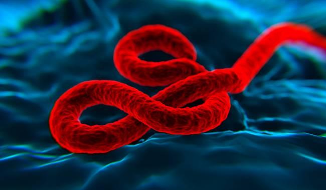 Simulación de ordenador del virus del Ébola. / Fotolia