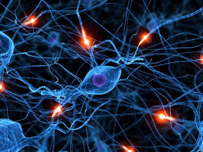 Red neuronal. Imagen: Universidad de A Coruña
