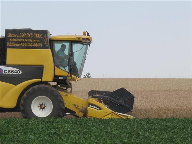 Los restos de cultivos herbáceos son los que más contribuyen a la disponibilidad de biomasa con fines energéticos.
