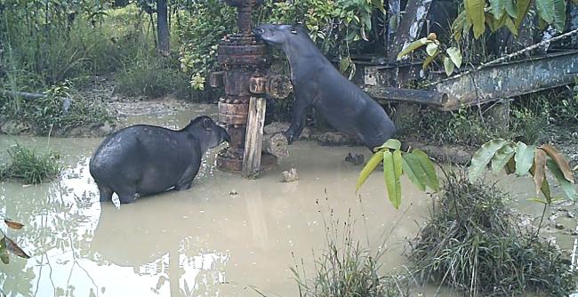 Animales salvajes en una zona contaminada.