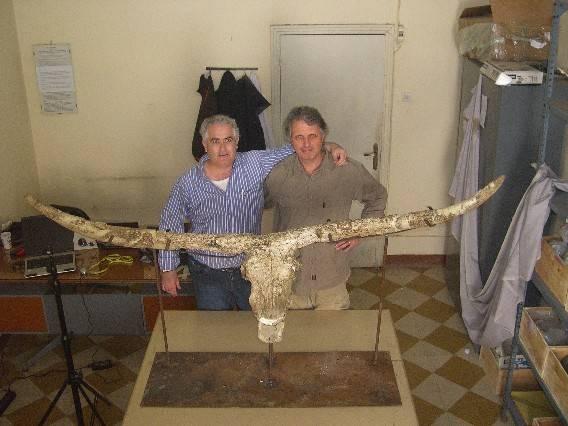 toro, paleontología, fósil