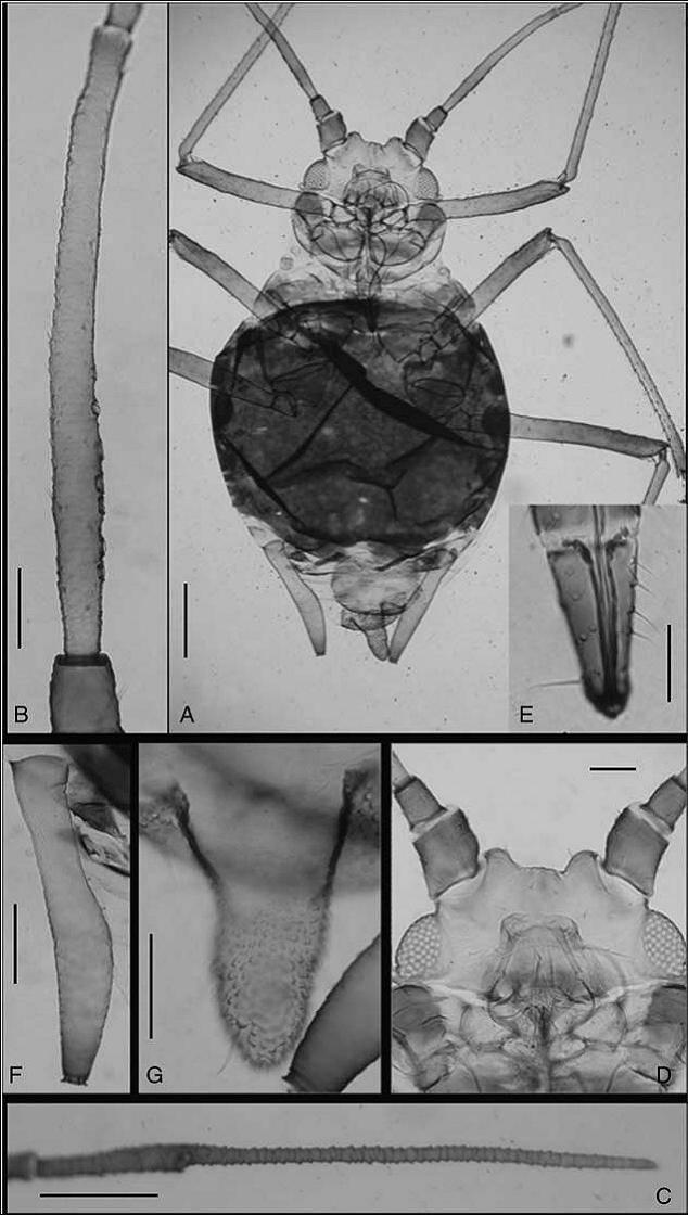 Científicos de la Universidad de León, la Universidad de Valencia y la Universidad de Costa Rica describen este género en un artículo publicado en 'Canadian Entomologist'