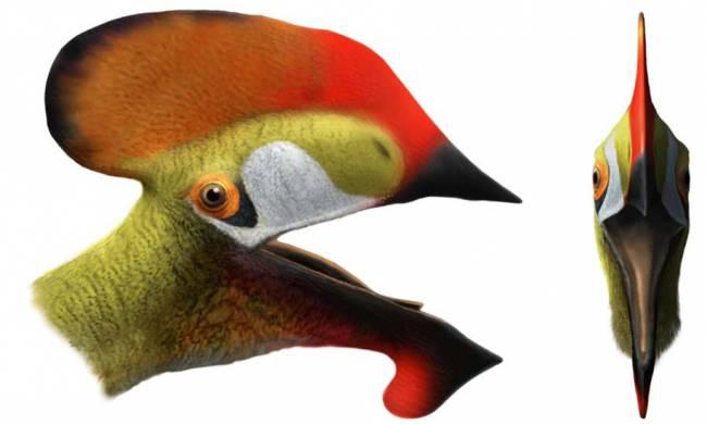 Hallan nueva especie prehistórica de reptil volador en Cuenca