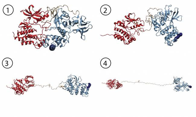simulación de dinámica molecular