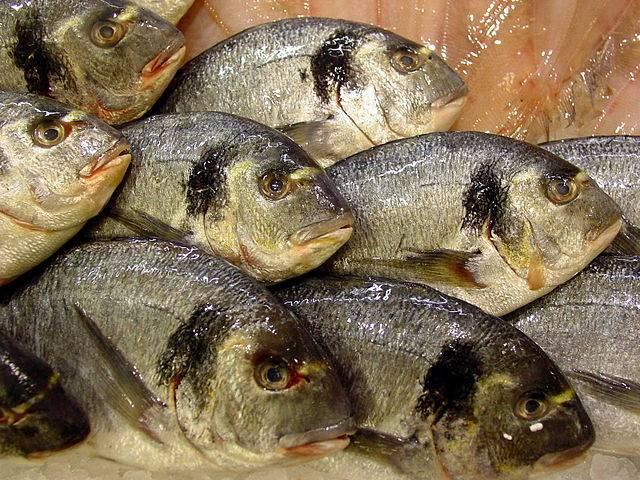 Identificados los virus que provocan linfocistis en peces