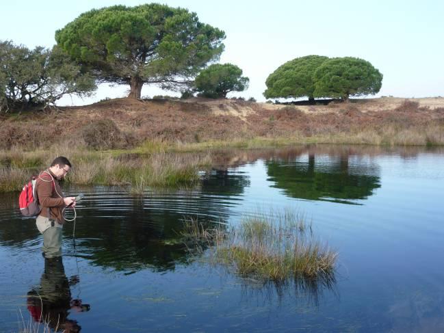 Lagunas de Doñana