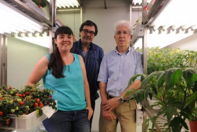 Los investigadores Marta Renato, Joaquín Azcón Bieto y Albert Boronat, en la Facultad de Biología de la Universidad de Barcelona.