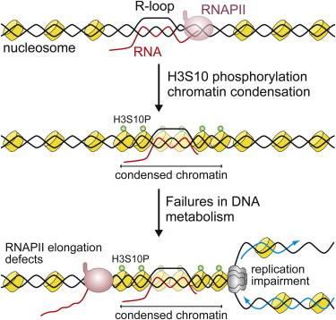 Imagen del artículo en la revista Molecular Cell