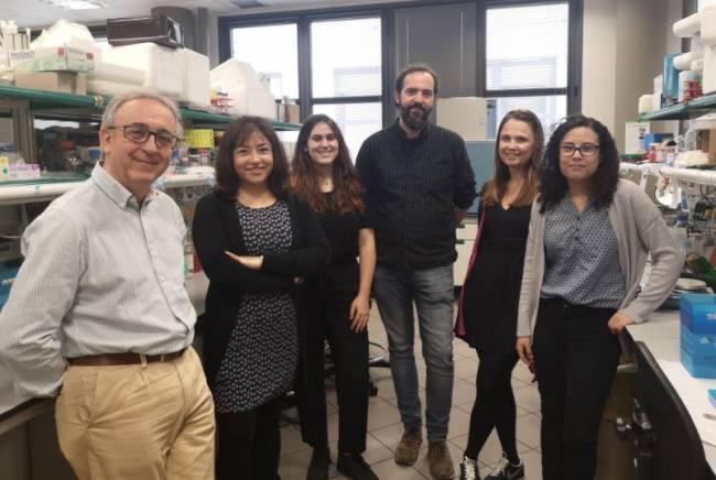 Antonio Zorzano y el equipo del laboratorio de Enfermedades Metabólicas Complejas y Mitocondrias que ha participado en esta investigación