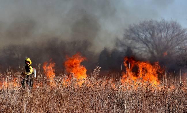 fuego incendio forestal