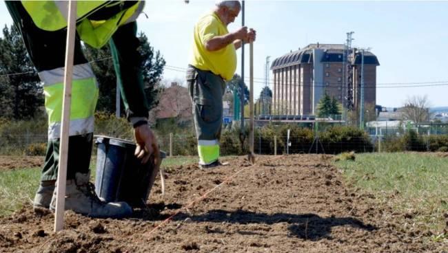Plantación de cultivos energéticos en el proyecto Life Lugo + Biodinámico