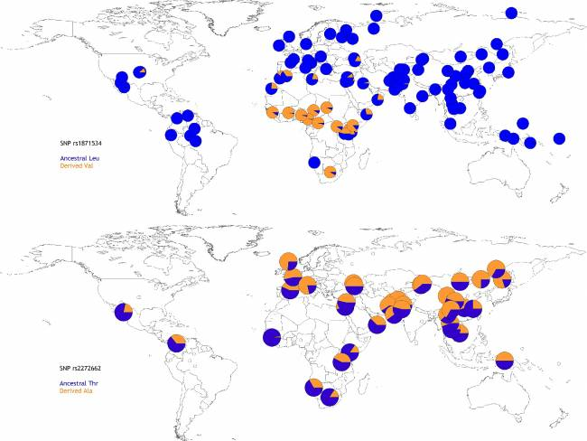 Worldwide allele frequencies for the Leu372Val (rs1871534, top) Thr357Ala (rs2272662, bottom) polymorphisms