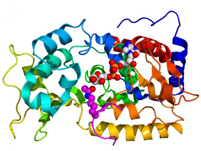 Estrutura cristalográfica de Sir2. / Wikipedia