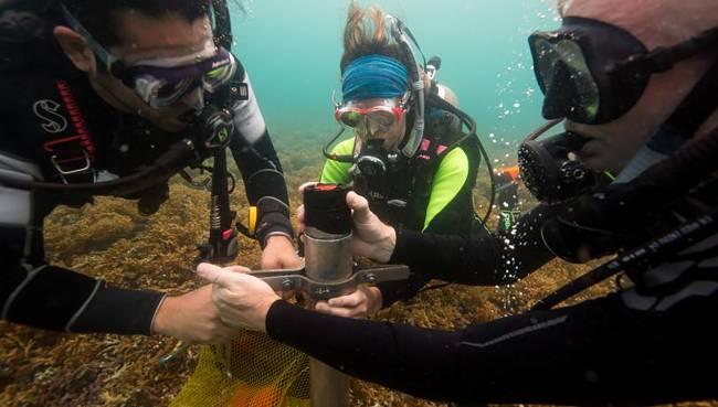 Recogida de muestras de sedimento en corales