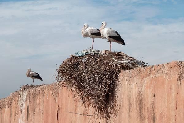 Ropa, cuerdas y cigarros, entre los desechos que conforman los nidos. / Alisan