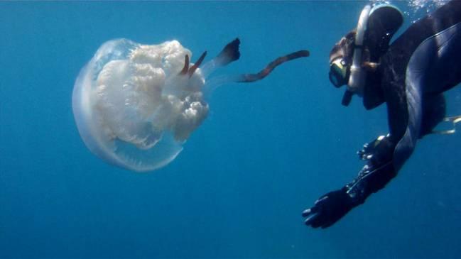 Karen Kienberger with the jellyfish Rhizostoma luteum. / Darius Enayati